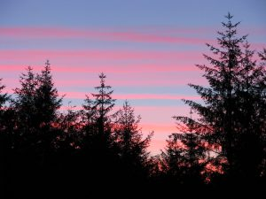 Pink stripey sunset sky over Cynwyd Forest